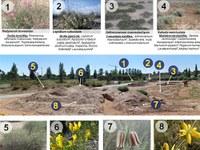 L'Arborètum desenvolupa un projecte per recrear la flora de la plana de Ponent i dels Monegres
