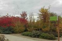 Un taller de bonsais iniciarà les activitats de tardor a l'Arborètum de Lleida
