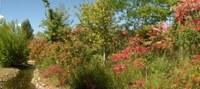 """Visita guiada """"Colors de tardor"""" i taller de bonsais al Jardí Botànic de Lleida"""